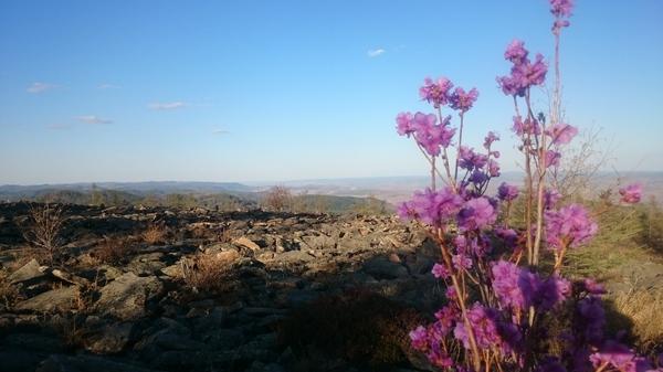 Багульник. 1210м над уровнем моря. багульник, пейзаж