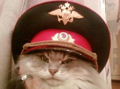 http://cs4.pikabu.ru/post_img/2016/05/26/9/1464274929182489731.jpg