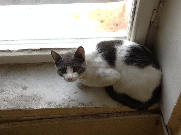 Найден кот, Москва, ВДНХ Кот, Найден кот, Москва, Потеряшка