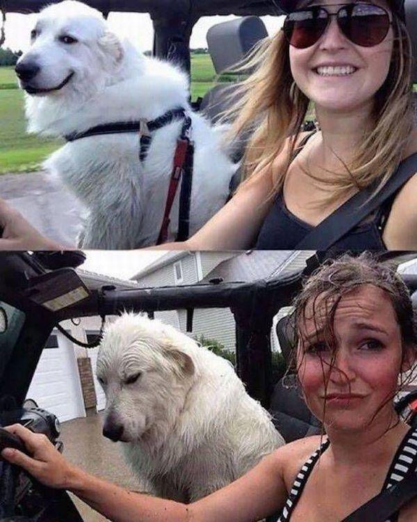 Ничто не предвещало беды Беда, Дождь, Машина без крыши, Собака, Девушки