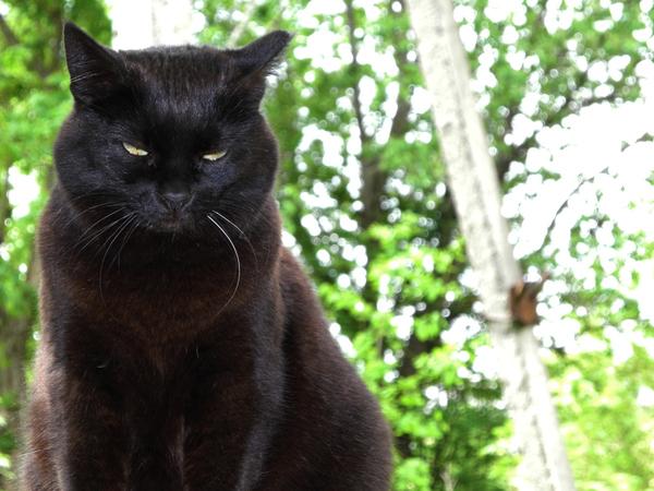 Просто Кошка. Кот, Животные, Мур, Киски, Фото
