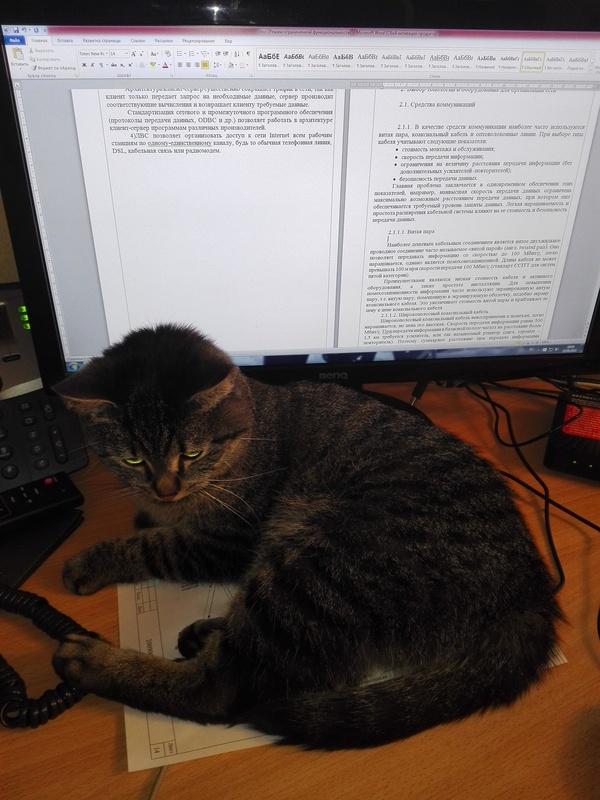 Моя подготовка к диплому в тему поста: Кот, Диплом, Помеха