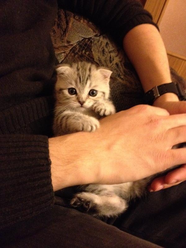 Подросла котейка кот, выросла, метаморфозы, время идет, длиннопост