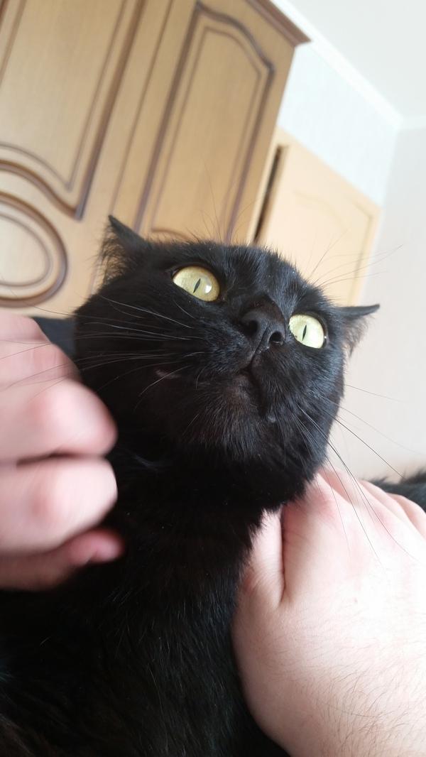 Кажется мой кот заключил сделку с дьяволом