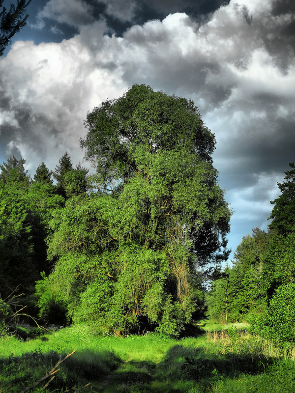 Фото, природа, дерево, HDR. HDR, Природа, Дерево, Фото, Текст
