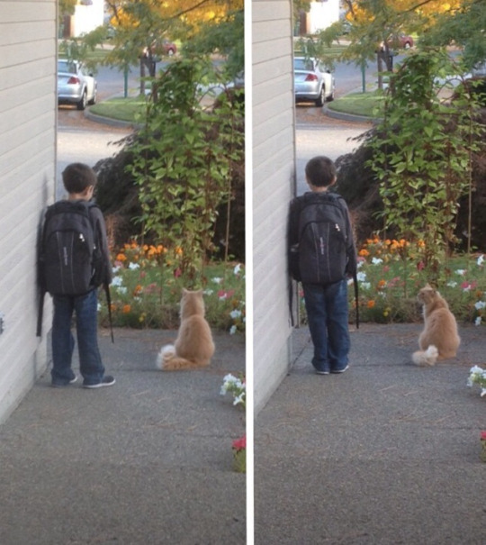 best cat harness leash