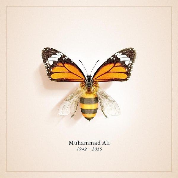 Твит Усэйна Болта в память о Мохамеде Али Мохаммед Али, Усейн Болт, Twitter, Оса, Бабочка, Красота