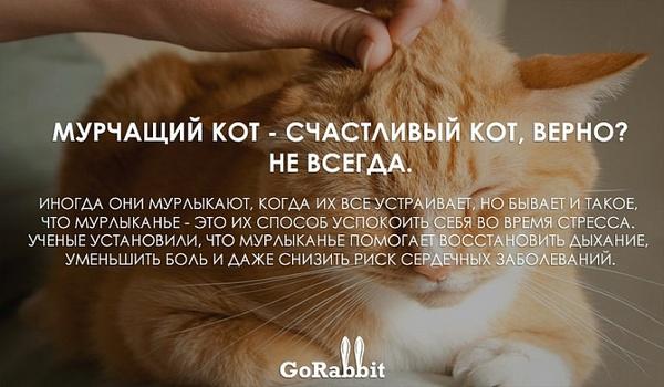 Повадки животных, которые значат совсем не то, что ты думаешь Животные, Кот, Собака, Длиннопост, Не мое