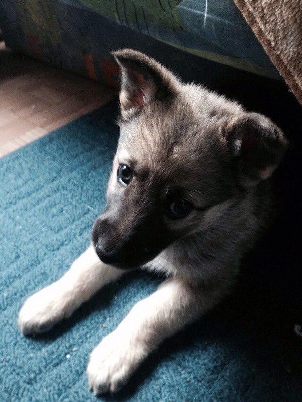 Отдам собачку в Питере отдам в хорошие руки, в добрые руки, Санкт-Петербург, Собака, Помощь, длиннопост