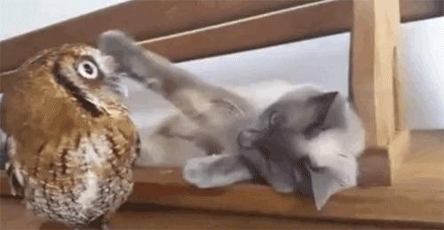 Моя сова!Хочу и глажу!