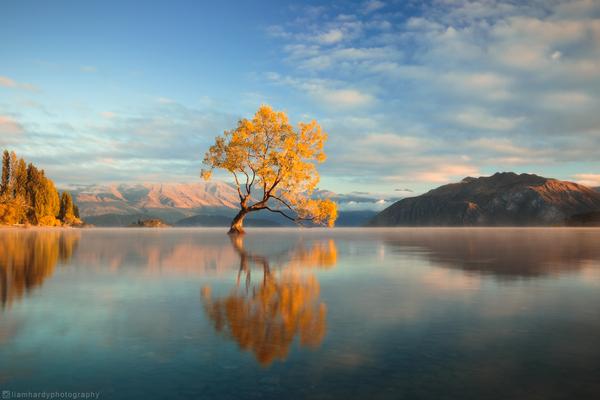 Озеро Уанака (Wanaka) в Новой Зеландии Новая зеландия, Озеро, Дерево, Природа, Фотография