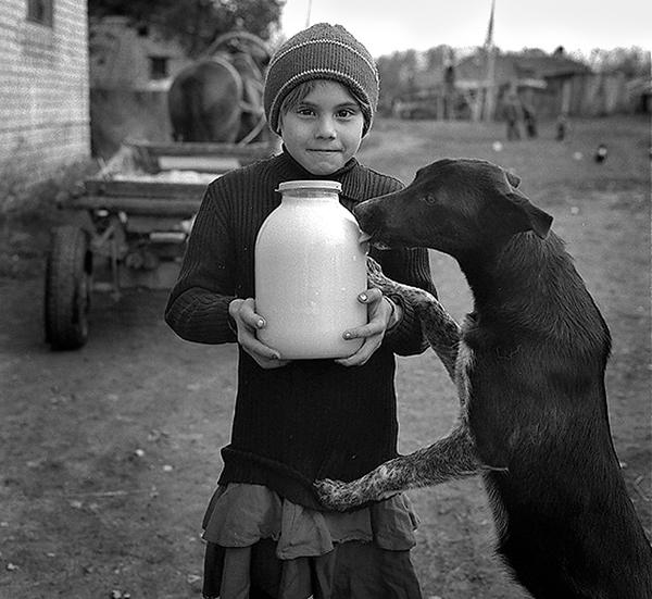 Парное молочко Длиннопост, Молочко, Корова