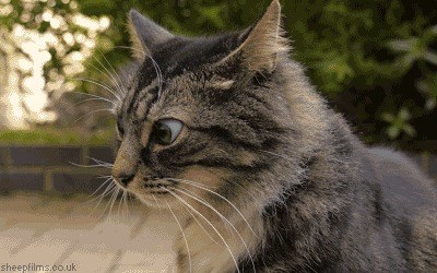 best cat litter for older cats