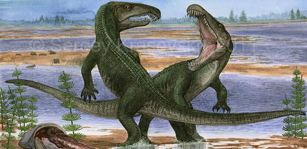 Как птичка вылечила зубы крокодилу thumbnail