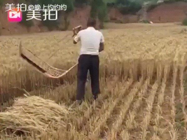 Собирает урожай, как босс!