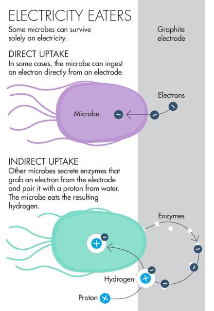 Обнаружено новое живое существо, которое питается электронами длиннопост, наука, новая жизнь, geektimes, видео