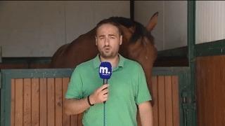 Лошадь мешает греческому репортеру делать его работу Лошади, Репортер, Греки, Гифка
