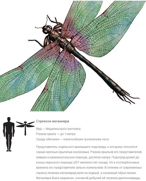 Куда делись насекомые-гиганты? Интересное, палеонтология, Природа, наука, Насекомые, Гигант, прошлое, жизнь, длиннопост