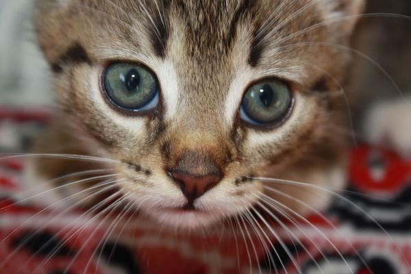 Просто симпатиШный котик Кот, Фото, Бабушкин кот