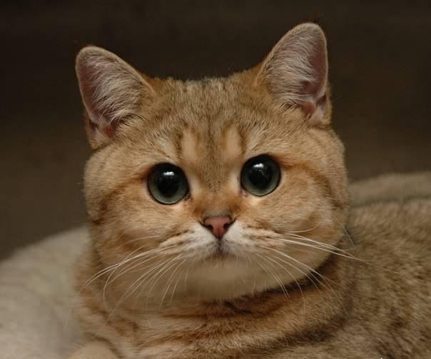 кот скачать торрент - фото 4