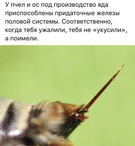 """""""Ужасная"""" правда о пчелах."""