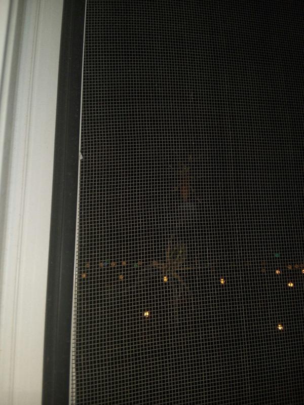 Когда за окном тебе не рады.