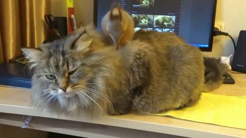 Когда сделал нычку в коте, и не можешь найти Кот, Белка, Заначка, Позитив, Из сети, Гифка