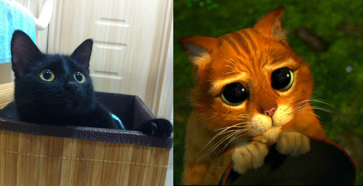 кружевом кот из шрека фото картинки малознакомому