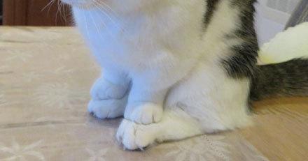 Мне норм Кот, Сидит