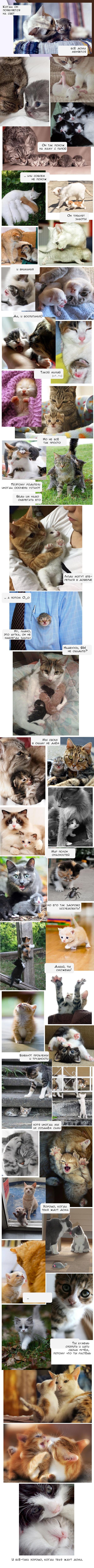 Коты. И люди Кот, Люди, Семья, Длиннопост, Родители, Фото