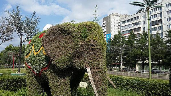 В Красноярске слоны поросли коноплей... Красноярск, ЯУмруВКрасноярске, Раста, Наркотики