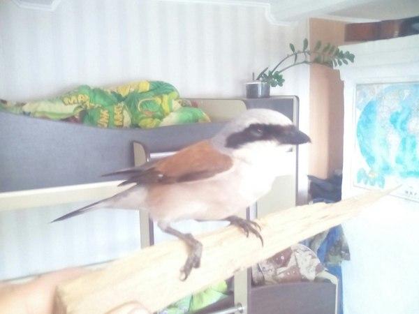 Прилетало ко мне вот Птицы, Нежданчик, Кто читает теги тот молодец, Срач