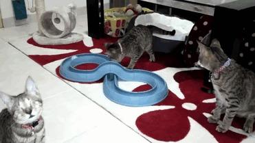 Три слепых кота Кот, Слепой, Три слепых кота, Доброта, Гифка, Длиннопост