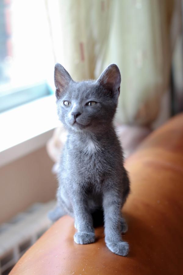 Помогите, пожалуйста, пристроить. Нежные котята в добрые руки. Сочи. Помощь, Сочи, Кот, В добрые руки, Длиннопост