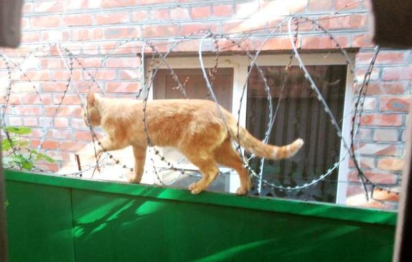 Суровый ростовский кот Кот, Колючая проволока, ВКонтакте, Возможно было