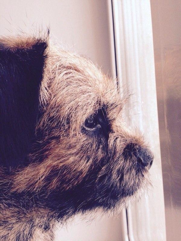 Размышления у окна