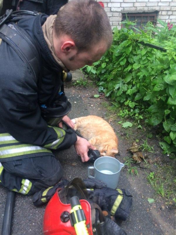 Спасение котофеича после пожара. Кот, Пожар, Мчс, Длиннопост