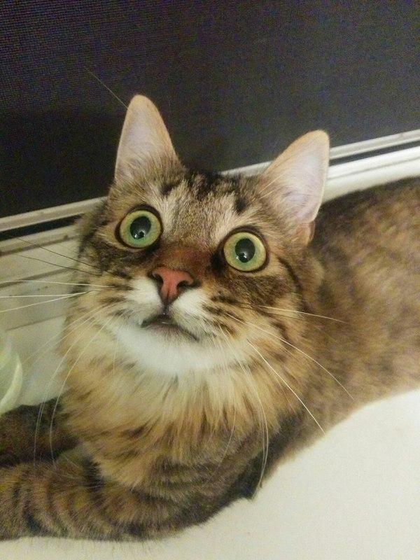 В продолжении поста о коте... Кот, Люди, Будьте добрее