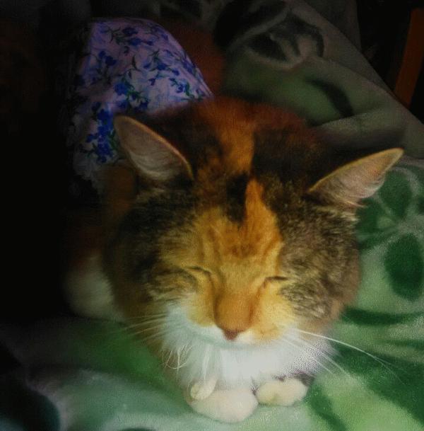Рак у кошки, кто нибудь сталкивался? Кот, Рак, Совет