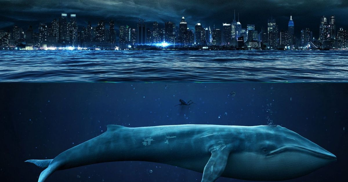 blue whale pictures - HD1600×1000