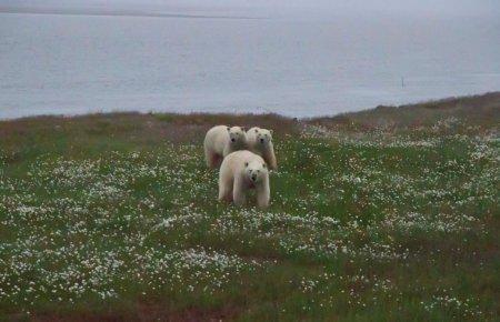 Остров Белый. Арктика. Арктика, Белый, Экспедиция, Длиннопост