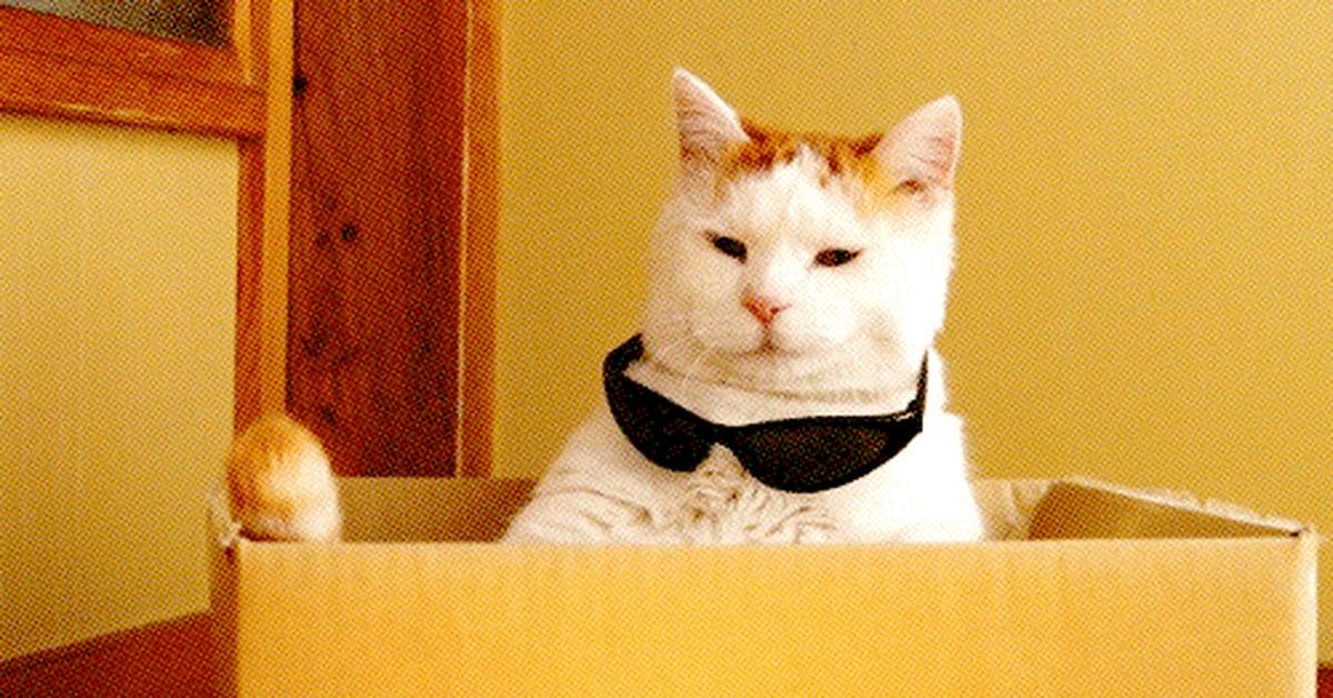 Cat animated gif tumblr