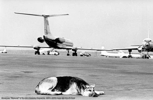"""Овчарка """"Пальма"""" и Ту-134 Москва, Внуково, 1974-1976 года (с) Юрий Рост"""