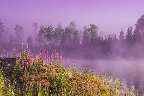 Туманное утро Удмуртия, утро, туман, Россия, Природа, Фото, фотография
