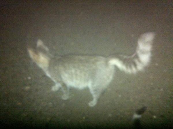 Кто потерял котиков? Кот, Потеря, Ижевск, Вернитесь в семью!, Коты спасены и накормлены