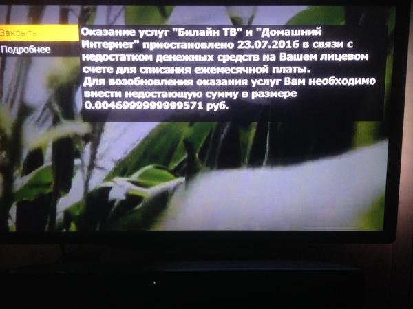 Билайн тв смотреть порно канал онлайн