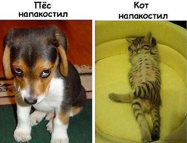 Собака-кошка