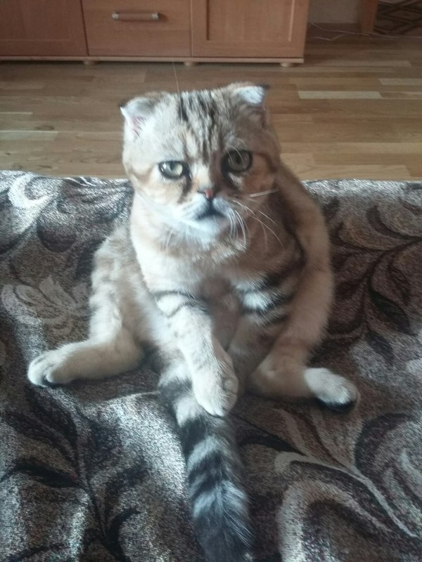 Мой суровый котёнок Кот, Суровость