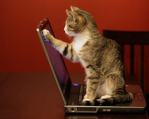 Выбор подержанного ноутбука Ноутбук, Компьютер, Диагностика, Покупка, Выбор, Консультация