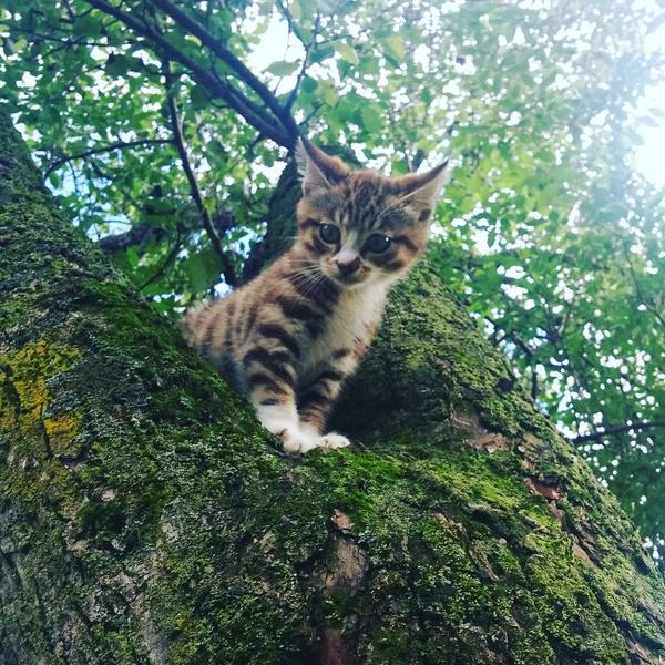 Котейка на груше :3 Кот, Фото, Милота, Лето